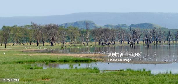 lake nakuru national park, kenya - lake nakuru - fotografias e filmes do acervo