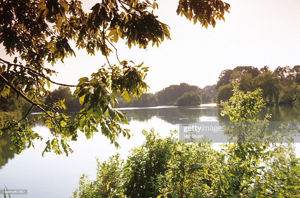 Lake near Ankum, Osnabr?cker country, Germany : Stock Photo