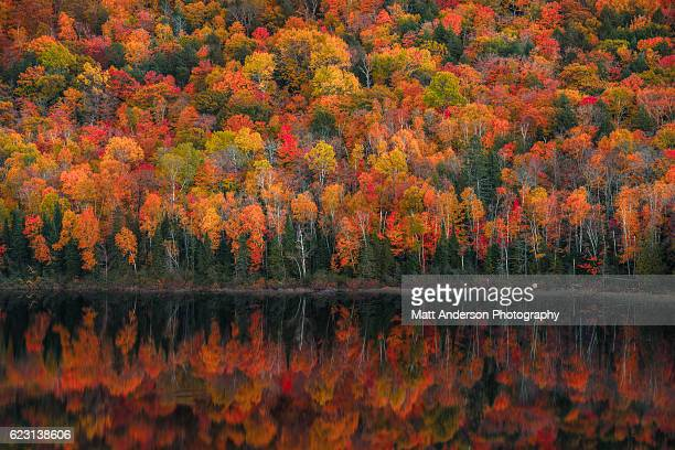 lake of the clouds fall color reflections #1 - acero foto e immagini stock