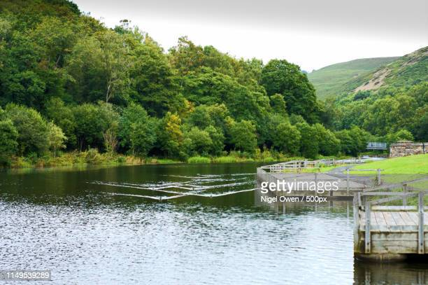 lake - nigel owen stock pictures, royalty-free photos & images