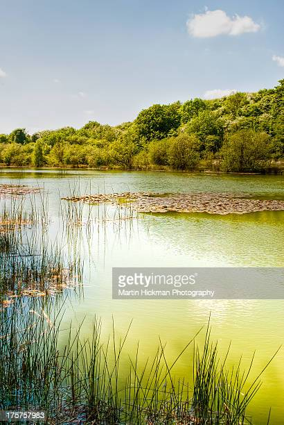lake - bedfordshire stock photos and pictures
