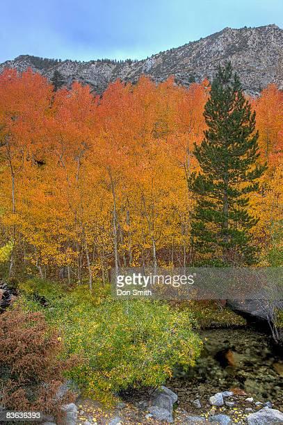 lake sabrina aspens - don smith imagens e fotografias de stock