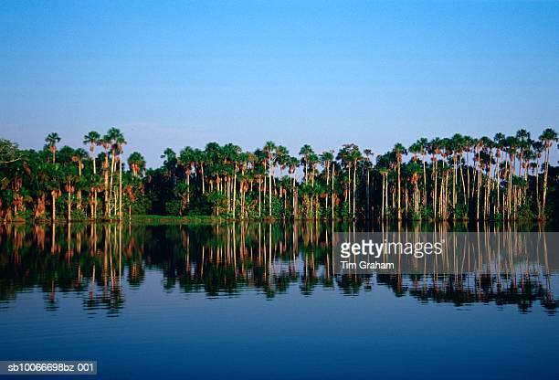 Lake Sandoval, Peru Rain Forest