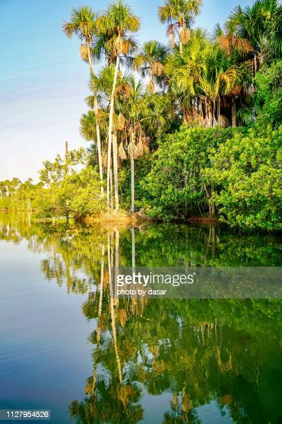 lake sandoval - peruvian amazon stock pictures, royalty-free photos & images