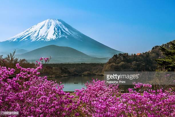 lake shojiko - springtime - mount fuji stock photos and pictures