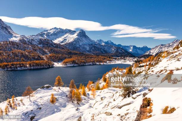 lake sils in autumn, engadine, switzerland - larch tree stock pictures, royalty-free photos & images