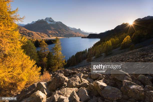 lake sils in autumn, engadine valley, graubunden,  switzerland - larch tree stock pictures, royalty-free photos & images