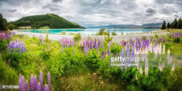 Lake Tekapo and flowers, New Zealand
