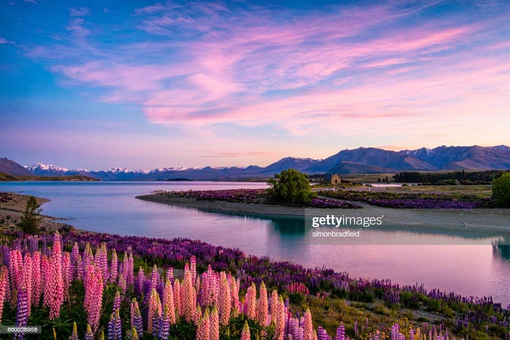Lake Tekapo al amanecer, Isla Sur de Nueva Zelanda : Foto de stock