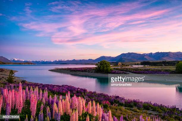 lake tekapo at dawn, new zealand south island - new zealand stock pictures, royalty-free photos & images
