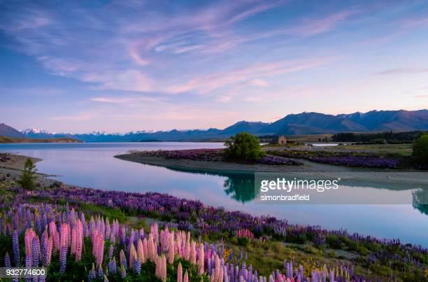 lake tekapo al amanecer, isla sur de nueva zelanda - lago tekapo fotografías e imágenes de stock