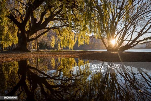 lake tekapo autumn leaf - lago tekapo fotografías e imágenes de stock