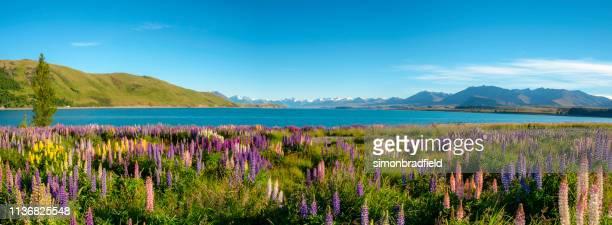 lake tekapo panoramic - oceania stock pictures, royalty-free photos & images
