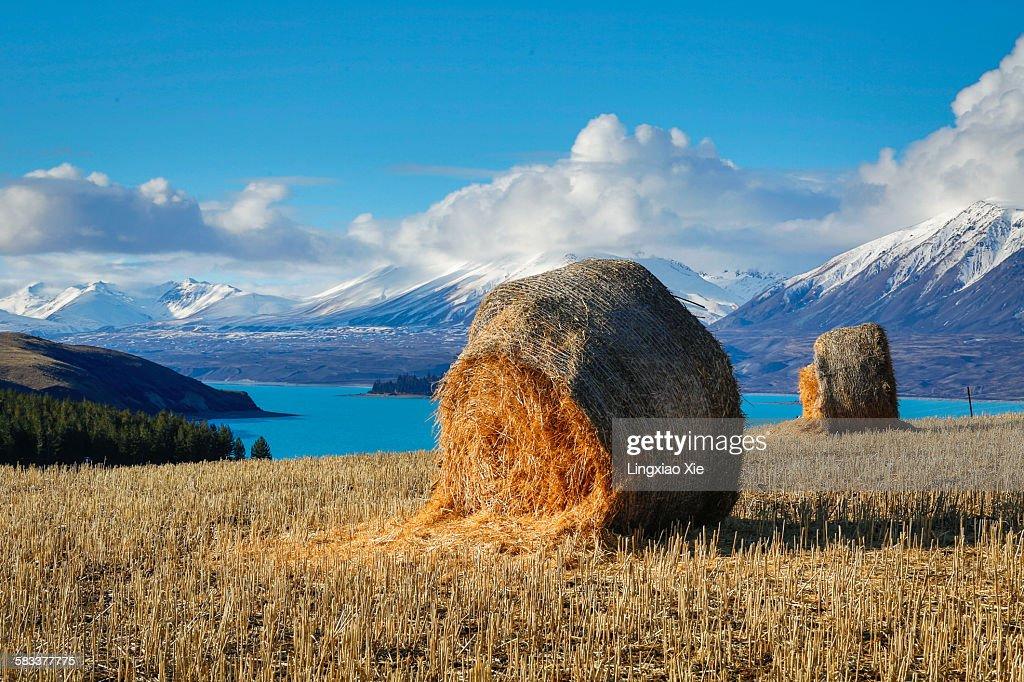 Lake Tekapo with hay bales and mountain background : Stock Photo