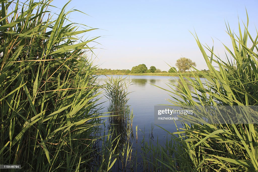 Blick auf den See : Stock-Foto
