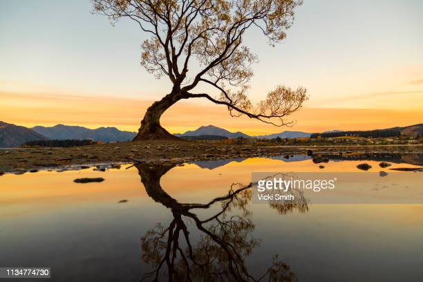 lake wanaka and mountains in new zealand - reflection pool stock pictures, royalty-free photos & images