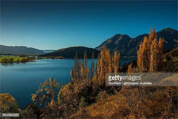 Lake Wanaka, in the Autumn, showing the vibrant golds and yellows of the seasonal colours, south island, New Zealand.
