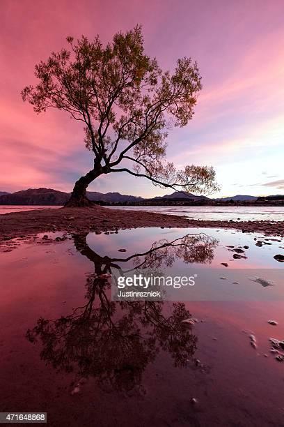 lago wanaka salgueiro - wanaka - fotografias e filmes do acervo