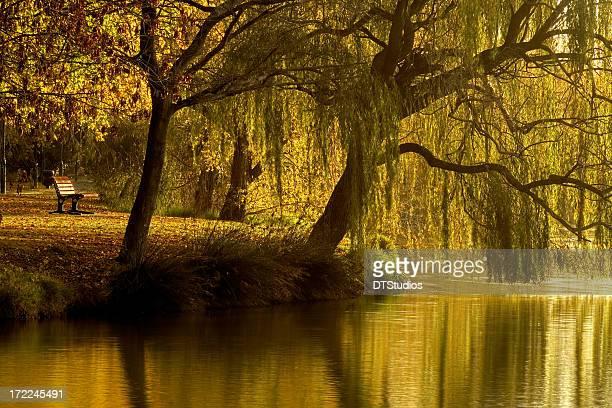 lake weeroona reflection - bendigo stock pictures, royalty-free photos & images