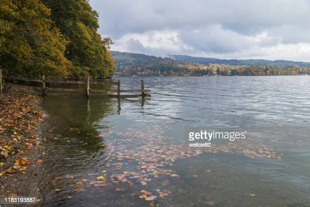 lake windermere gathering up leaves - lake windermere stock pictures, royalty-free photos & images
