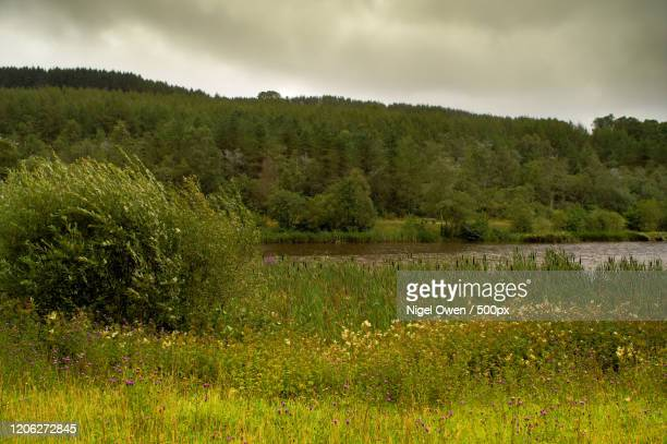 lake with belrush between meadow and forest - nigel owen stock pictures, royalty-free photos & images