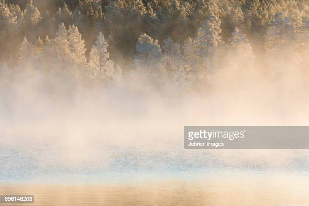 Lake with coniferous forest on foggy day