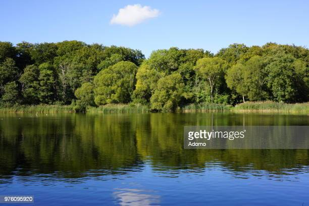 Lake With Trees Reflecting