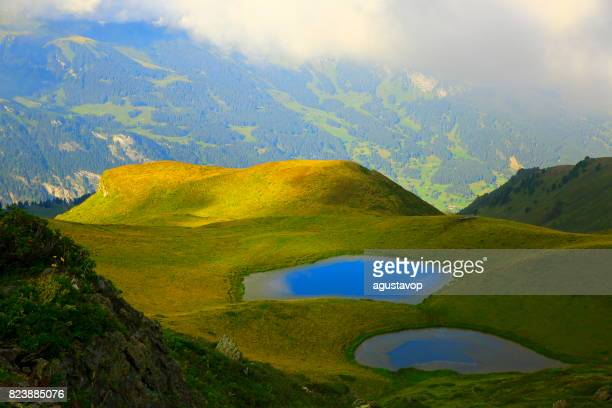 Lakes aerial view near Grindelwald and Fary tale landscape at blossoming flowers springtime: idyllic alpine flowerbed valley and wildflowers meadows, dramatic swiss snowcapped alps, idyllic countryside, Bernese Oberland,Swiss Alps, Switzerland