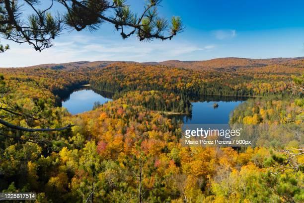 lakes among forest, shawinigan, quebec, canada - シャウィニガン ストックフォトと画像