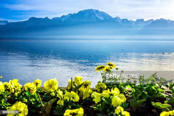 lakeshore of lake geneva near montreux - vaud - switzerland - meer van genève stockfoto's en -beelden