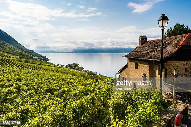 lakeshore vineyards at epesses in bourg-en-lavaux, lausanne, switzerland. - lausanne stock pictures, royalty-free photos & images