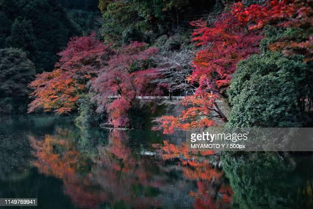 lakeside in autumn - miyamoto y ストックフォトと画像