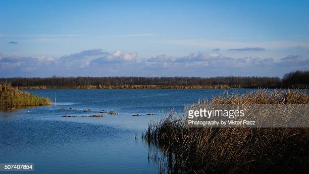 lakeside view - 2000 stock pictures, royalty-free photos & images