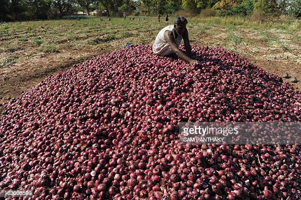 Lakhabhai an Indian farmer checks the bumper yield of farm fresh onions as Indian villagers and environmentalists hold a protest meeting against The...