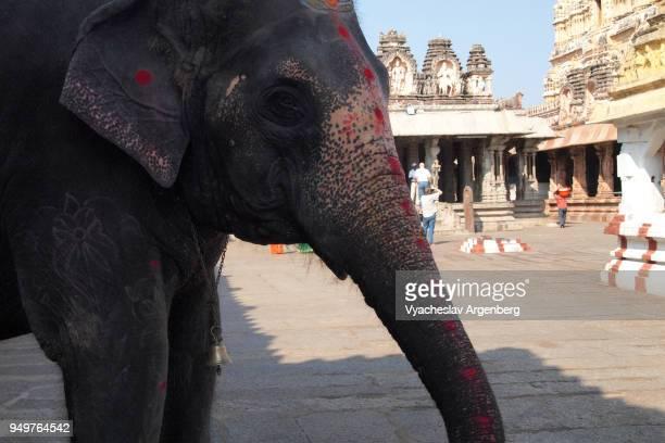 lakshmi, temple elephant of virupaksha temple, hampi, india - goddess lakshmi stock photos and pictures