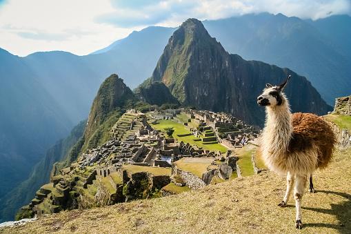 Lama And Machu Picchu 588223086