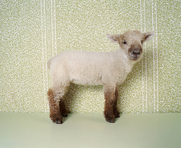 Lamb Standing Indoors, And Floral Wallpaper Wall Art