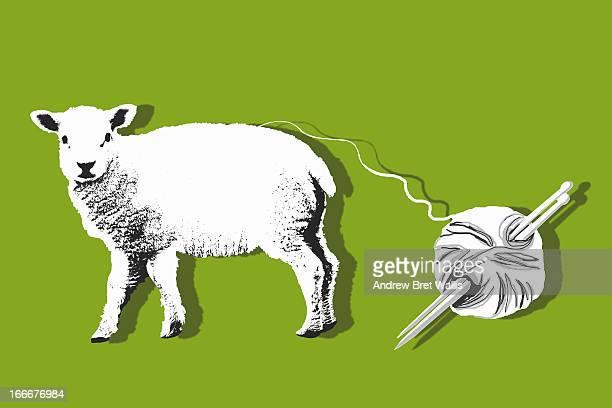 Lamb's fleece made into a ball of wool