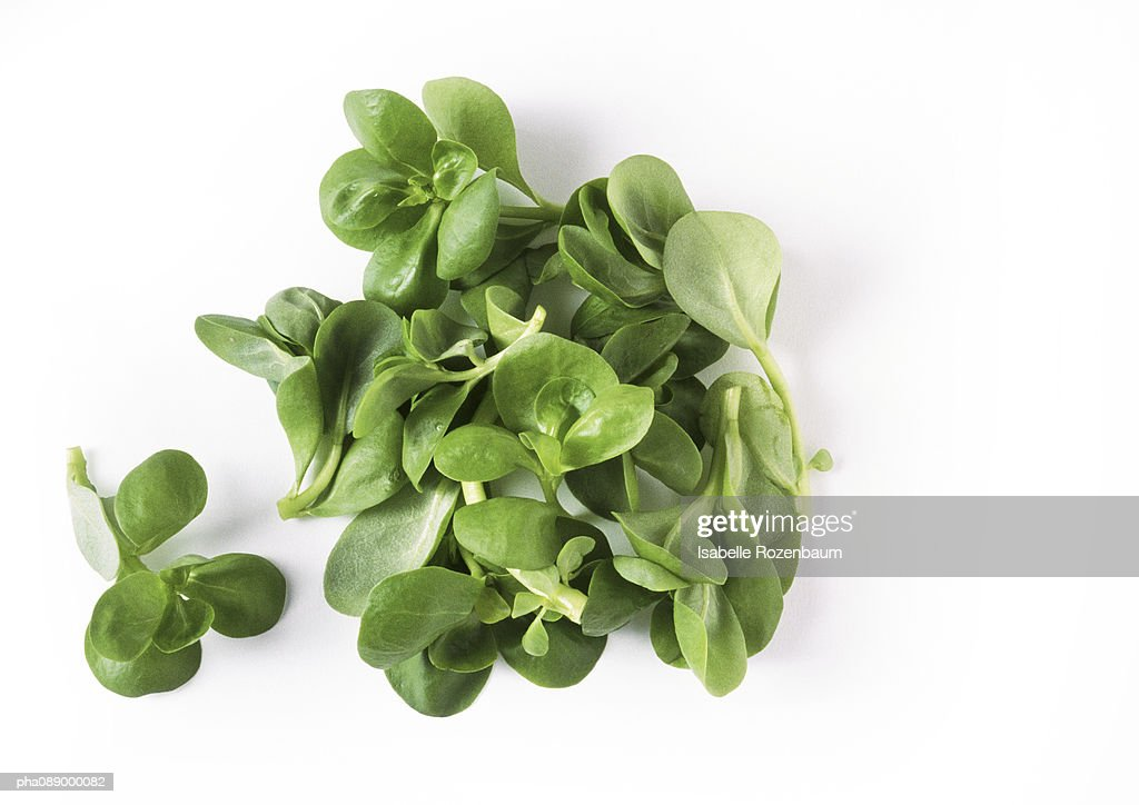 Lamb's lettuce, close-up : Stockfoto