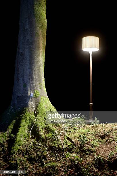 Lamp plugged into tree