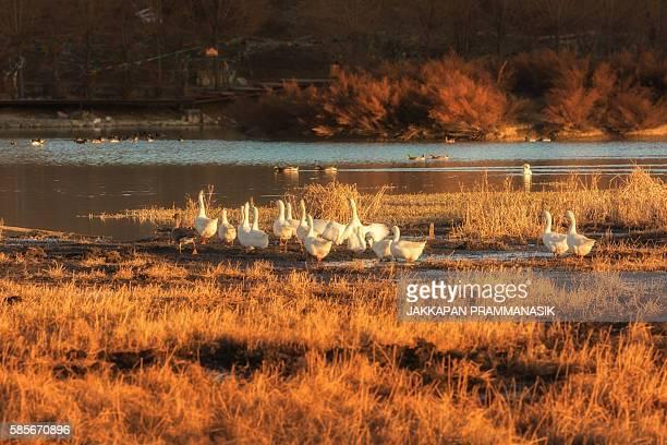 lamuyangcuo lake - songzanlin monastery stockfoto's en -beelden