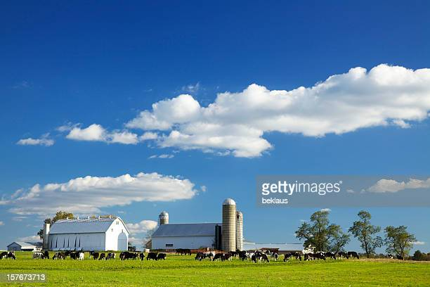 lancaster county farm - dairy stock photos and pictures