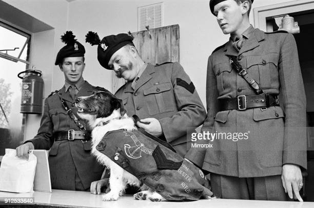 Lance corporal 'Paddy' was promoted Sgt Paddy when he was collected from quarantine at Hackbridge Kennels in Surrey Corporal McWilliams shoes Paddy...