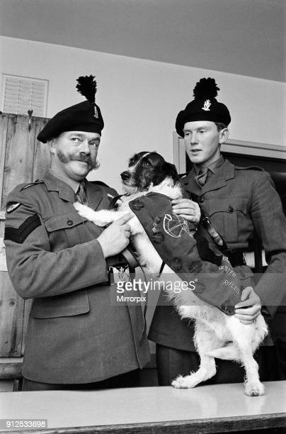 Lance corporal 'Paddy' was promoted Sgt Paddy when he was collected from quarantine at Hackbridge Kennels in Surrey He was released from quarantine...