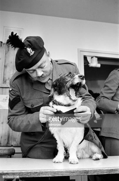 Lance corporal 'Paddy' was promoted Sgt Paddy when he was collected from quarantine at Hackbridge Kennels in Surrey The first Battalion the Royal...