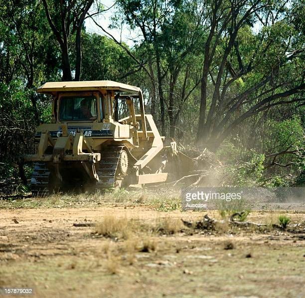 Land clearing' Broadacre clearing of native open eucalypt / cypress forest in a part of the fertile forested lands called the Brigalow Belt...