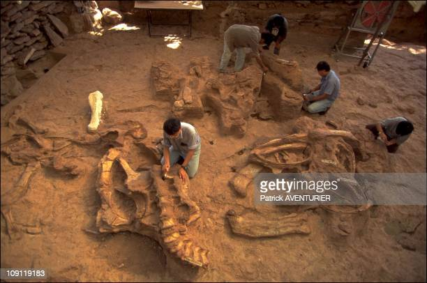 Land Of Dinosaurs On January 12Th Thailand Sahatsakhan Site Sauropod Fossils