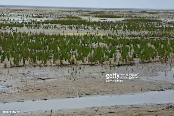 land reclamation, wadden sea, eiderstedt peninsula, schleswig-holstein, germany - schleswig holstein stock pictures, royalty-free photos & images