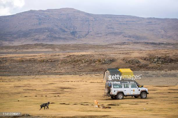 Land Rover Defender parked with tents set up for camping with 2 dogs running around in Sani Pass, Lesotho, Africa.