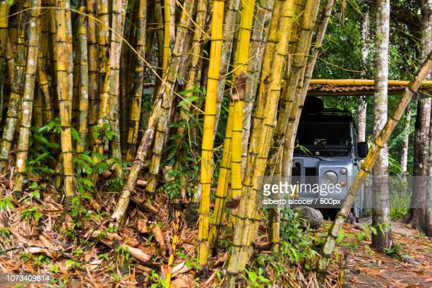 Land Rover in the forest